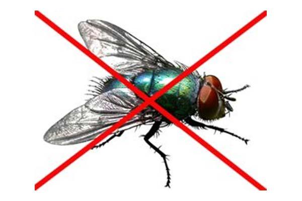 济南消杀公司:苍蝇的防治与消杀方法