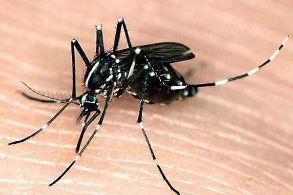 济南四害消杀:花蚊子太厉害了,应该怎么防治?