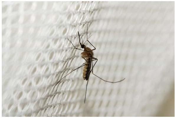 济南杀虫消杀:蚊子喜欢吸哪些人的血?