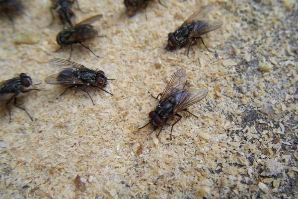 四害消杀之餐厅防治苍蝇的办法