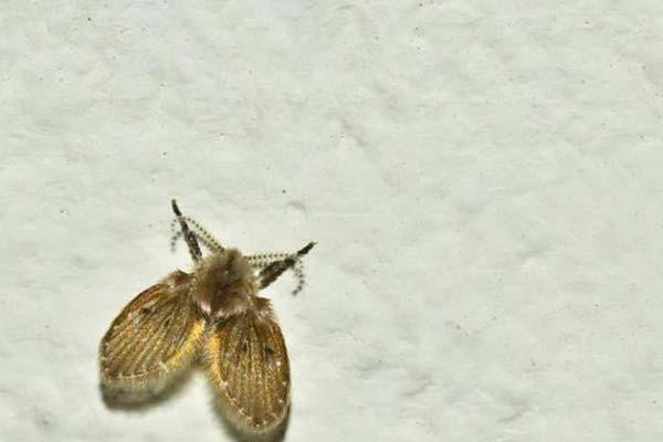 济南杀虫公司提醒您,不要小看家里的小飞虫
