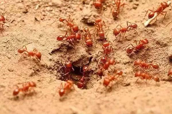 山东消杀杀虫公司