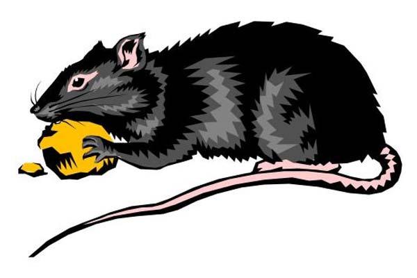 济南灭鼠杀虫公司