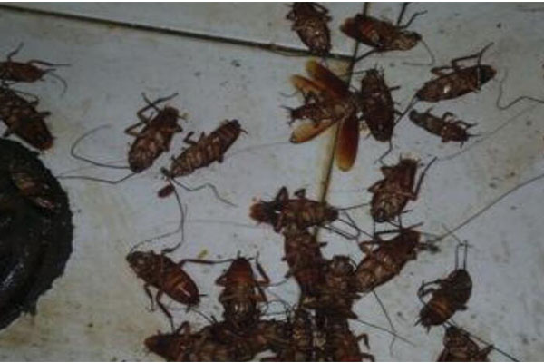 济南灭蟑螂公司