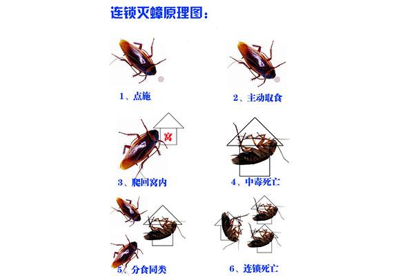 济南专业灭蟑螂公司