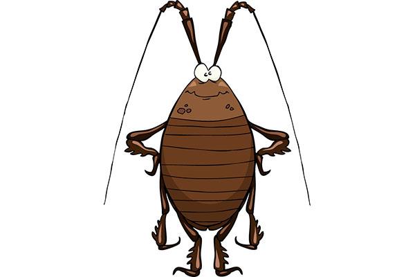济南灭蟑的三种防控方法