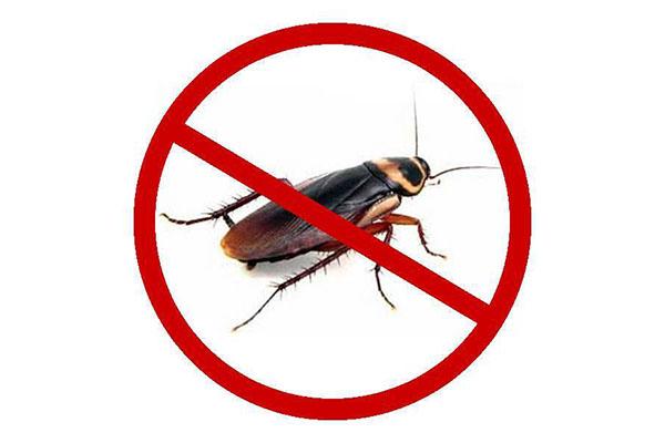 杀虫公司提醒大家快速消灭蟑螂的方法和技巧