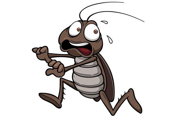 家里常常出没蟑螂怎么办?蟑螂的天敌是什么?