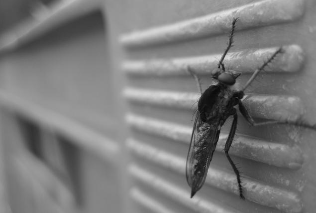 杀虫喷雾对身体有害吗?杀虫公司为您解释