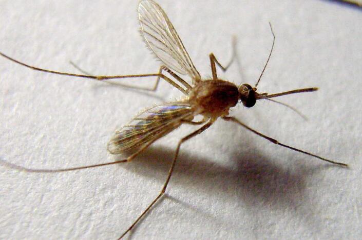 济南杀虫公司带你了解夏天常见的三个害虫