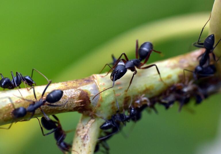 3个蚂蚁的杀虫和预防方法