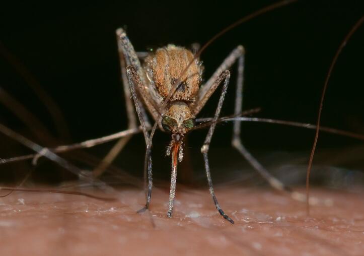 疟疾与蚊子